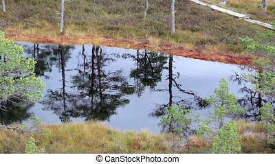 Water reflection of the trees found on the bog swamp marsh...