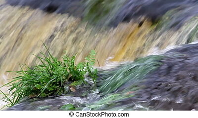 Small plants growing in the middle of the rushing water on bog swamp