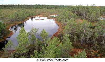 Overhead view of the large bog swamp marsh land with water...