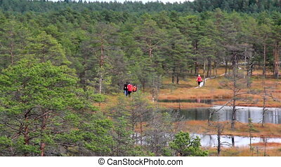 People walking on wooden trail on bog swamp - People walking...
