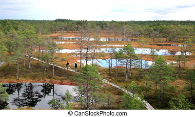 Large marsh land has wooden trail on bog swamp - Large bog...