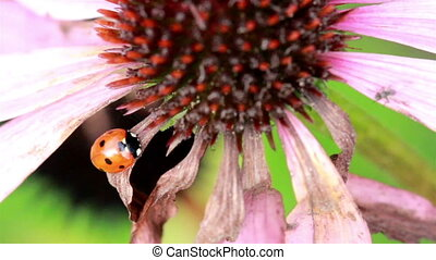 Closer image of a lady bug on top of leaf