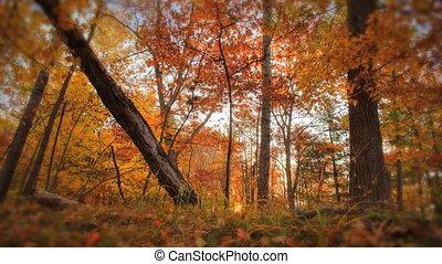 autumn timelapse