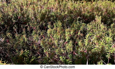Overhead view of the Marsh Labrador Tea Rhododendron...