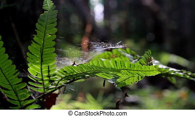 Ferns that has some spider webs in jungle forest - Ferns...