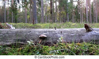 Elongated image of the fallen tree where you can see its log...