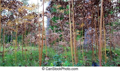 Shrubs growing within the forest. There are a great number...