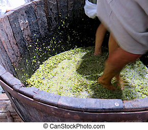 men and women inside the tank to press the grapes - men and...