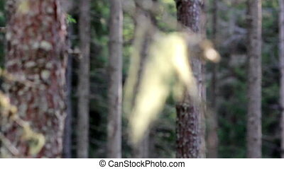 Close image of a hay stuck in the tree branch A small strip...