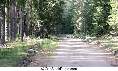 Trail in the forest is used by hikers bikers and campers...