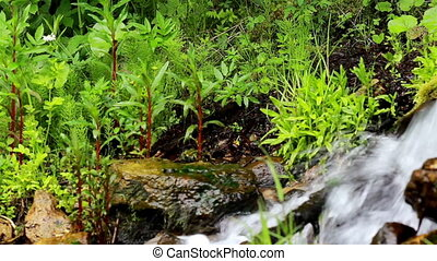 Water flowing and some shrubs in the nearby area. You can...