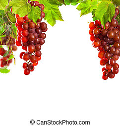 Pink wine grapes isolated on white background - Pieces of...