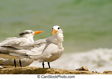 Seagul - Highlight of a beautiful seagul on Miami beach
