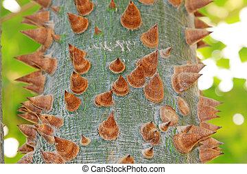 Ceiba thorny bark chorisia speciosa - Ceiba thorny bark in a...