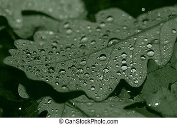 baissé, feuilles, couvert, gouttes pluie