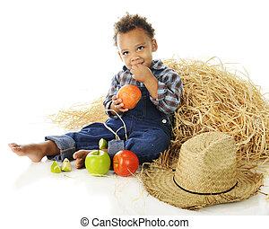 Little Apple Farmer - An adorable preschooler barefoot and...
