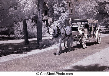 Horse and Carriage - Horse pulling a passenger carriage....