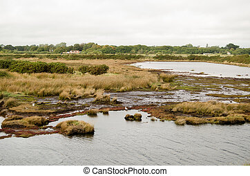 Salt Marsh, Keyhaven Reserve, Hamps - View of the salt marsh...