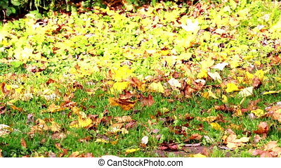 Leaving falling leaves on the ground - Leaving falling on...