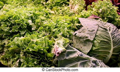 Big cabbages and green leafy vegetables - Big cabbage head...