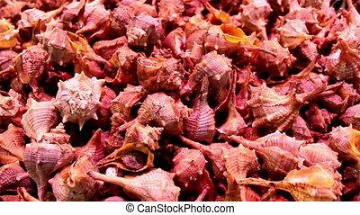 Small sea shells on display piled seashells - Piled...