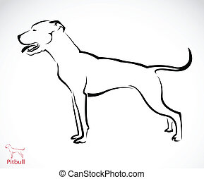 Vector image of an pitbull dog on white background