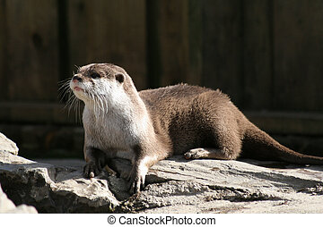 Otter 5 - Otter