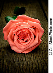 Pink roses on wood background, Still life style