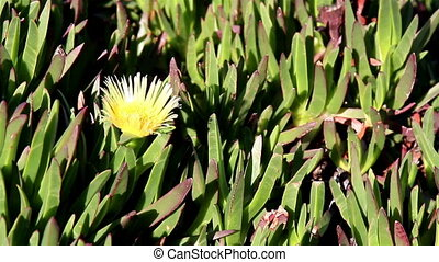 Yellow flower budding and surrounded by leaves grasses -...