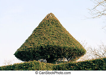 Cone Topiary - Topiary in shape of cone