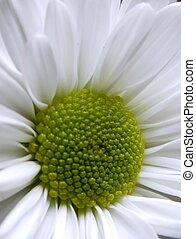 White flower freshness