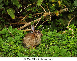 Hare on the grass - Small Hare sitting on a green grass in...