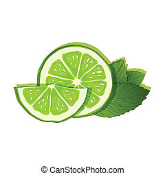 lime and mint on white background - vector illustration