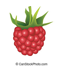 Raspberry on a white background - vector illustration