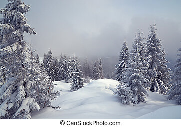 Winter in the mountain forest - Winter landscape with trees...