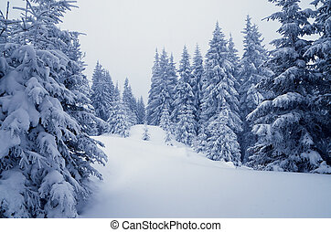 Winter Forest - Winter landscape with fir trees under snow...