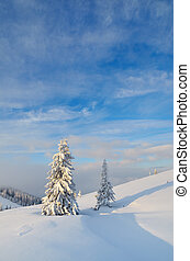 Snow-covered trees - Winter landscape with snow-covered...