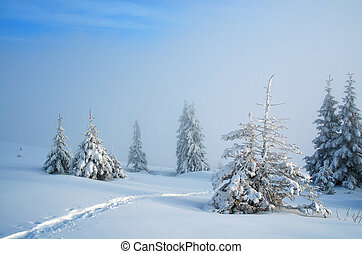 Winter with fresh snow - Winter landscape with fresh snow in...