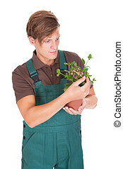 Male Gardener Holding Potted Plant - Portrait Of Male...
