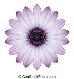 osteospermum, margarida, kaleidoscopic, flor, Mandala,...