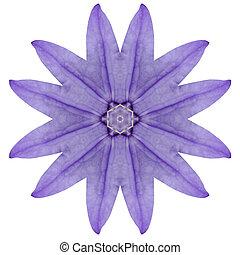 Purple Kaleidoscopic Flower Mandala Isolated on White