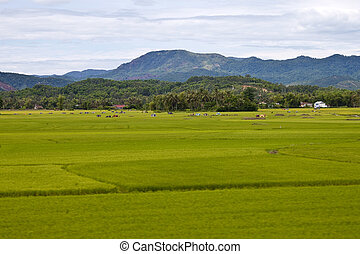 Countryside in Southern Vietnam