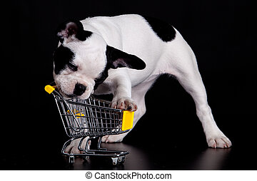 French Bulldog playing with a supermarket cart Funny little...