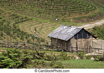 Agricalture at mountains near Sapa, Vietnam