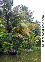 Coconut palms in Backwaters, Kerala, India