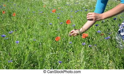 hand pick poppy flower - Girl hands pick poppy flowers in...