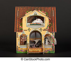 rats in the dollhouse - very small baby rats in the...