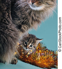 New Year portrait of a little kitten with mother cat