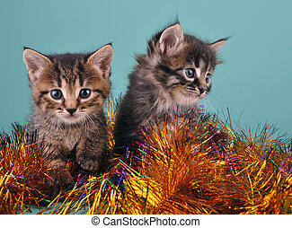 Chistmas portrait of little kittens Studio shot