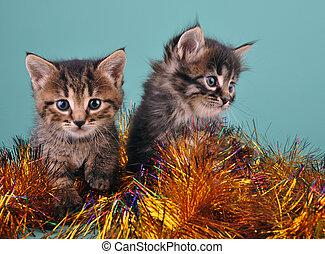 Chistmas portrait of little kittens . Studio shot.